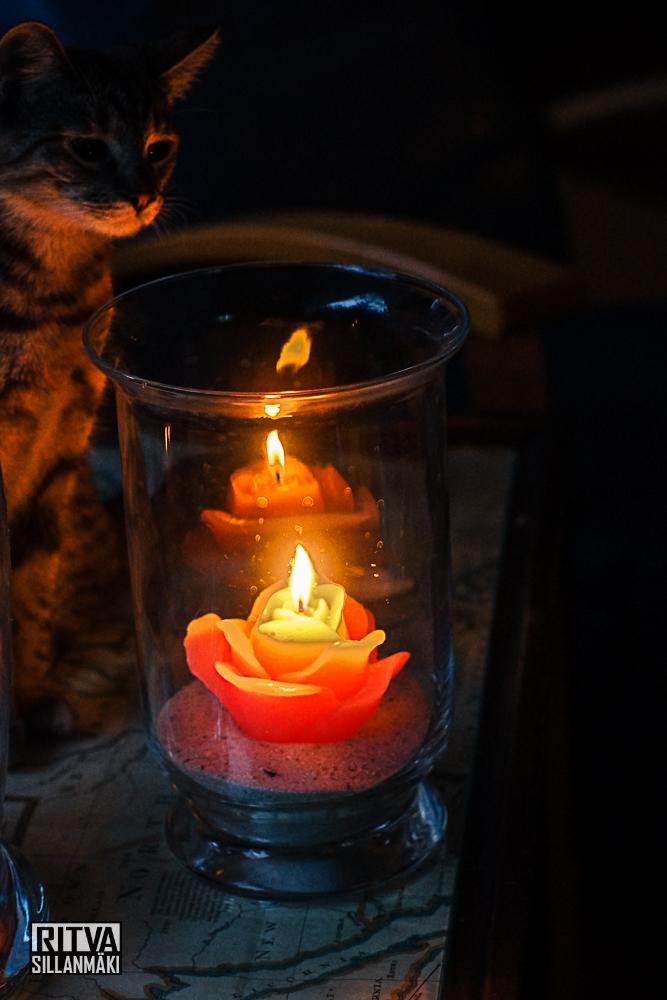 Tinka and a rose candle