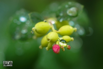Snowberry - Droplets (46 of 47)