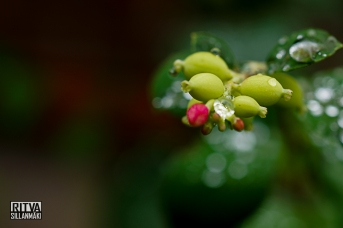 Snowberry - Droplets (8 of 47)