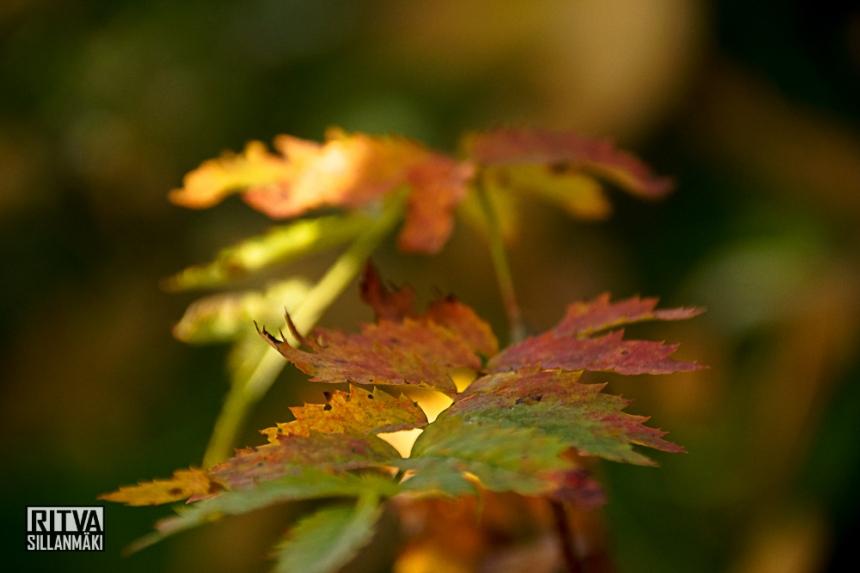 Autumn 14 (24 of 48)