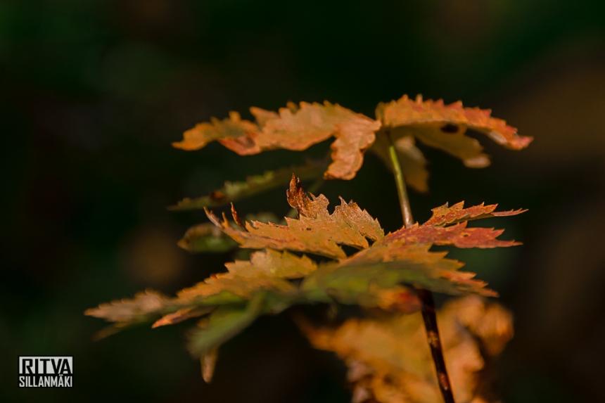 Autumn 14 (25 of 48)