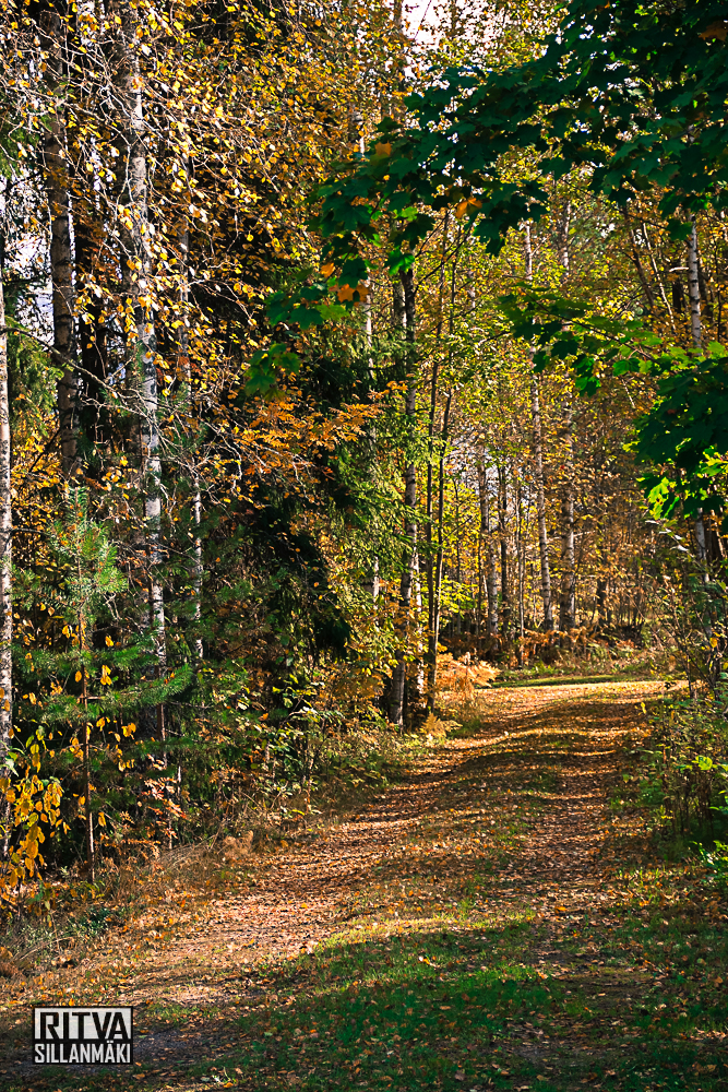 Autumn at ruuhijärvi-05503