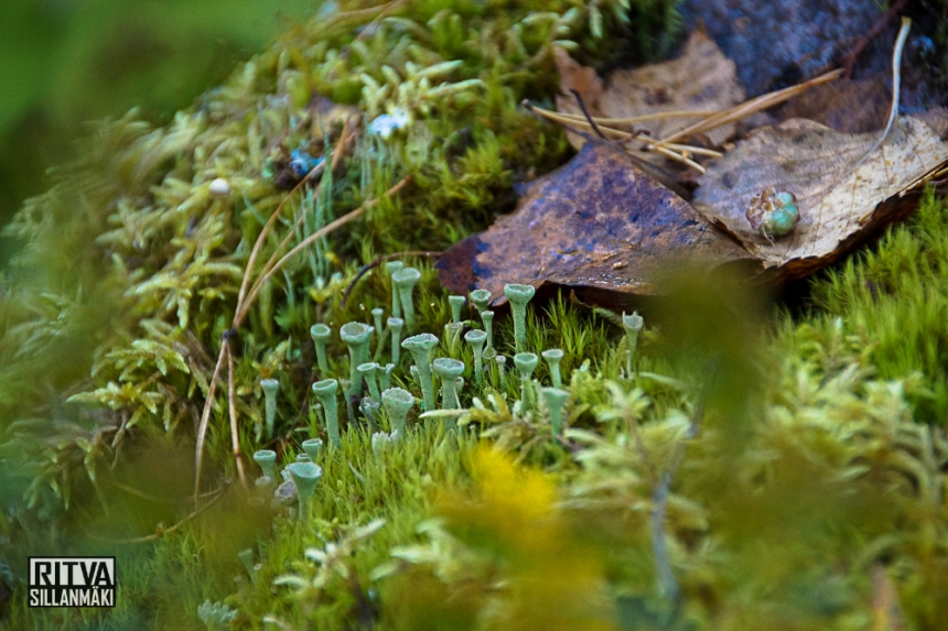 Autumn at ruuhijärvi-05508