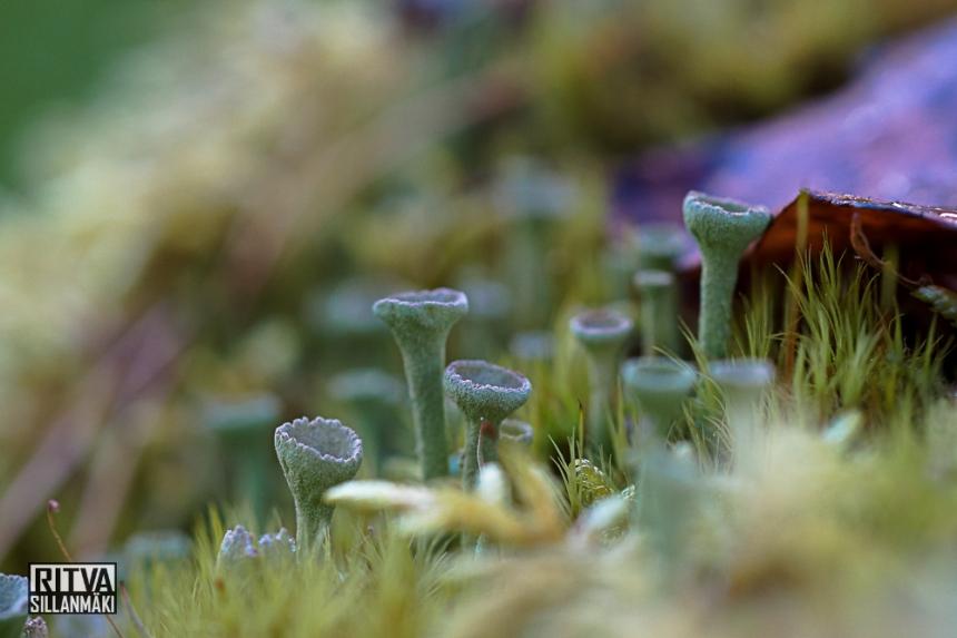 Autumn at ruuhijärvi-05512