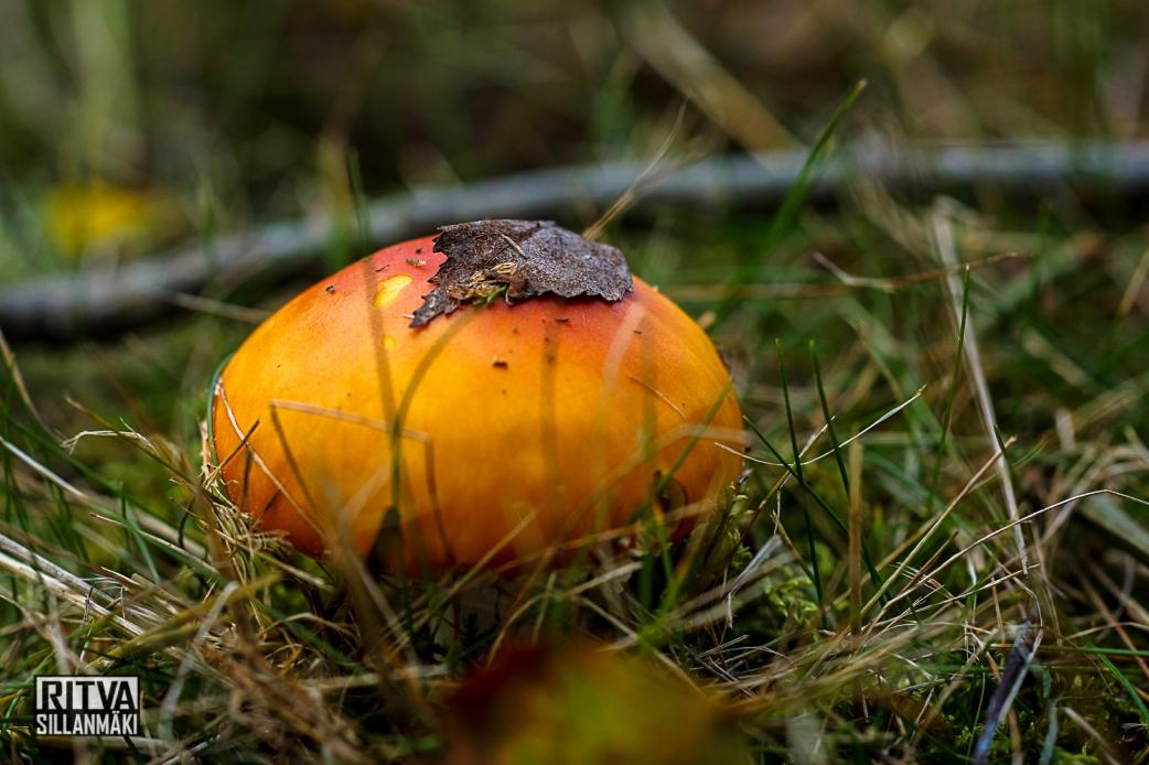 mushroom (9 of 43)