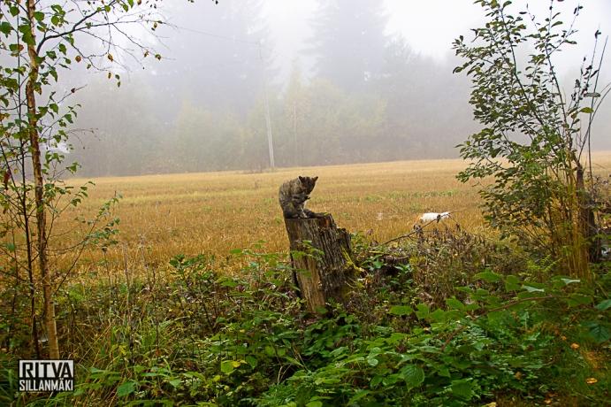 Tinka in morning mist