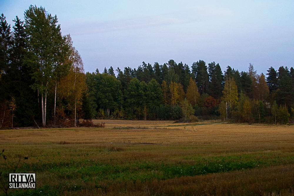 Ruska / Autumn  colors