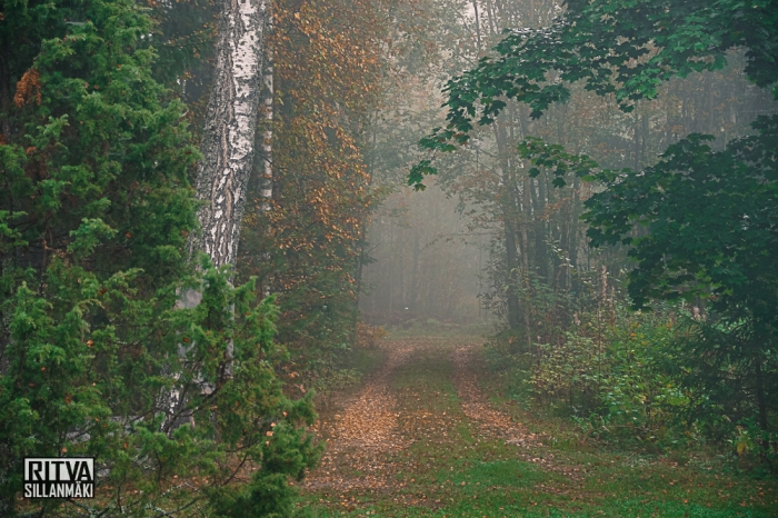 Early fall full of mist
