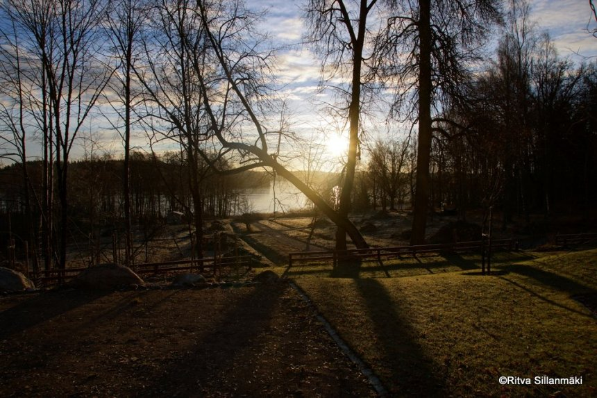 morning light 2