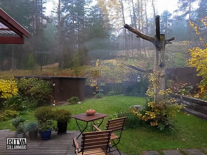 backyard-