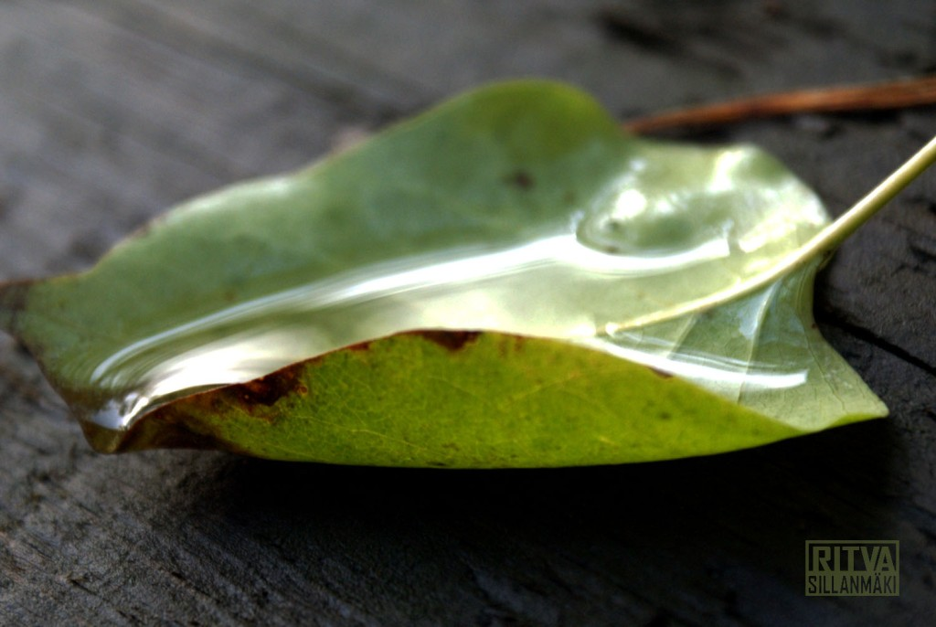 a leaf with water in the light