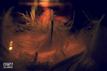 feathers and light (29 of 56)