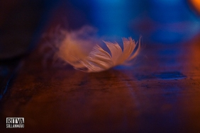 feathers and light (44 of 56)