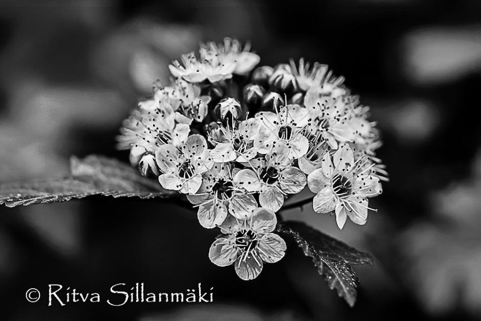 flower-