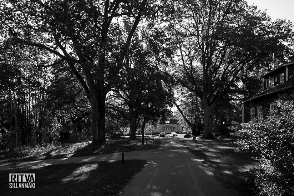 Ritva Sillanmäki - Park lane3-05475-2