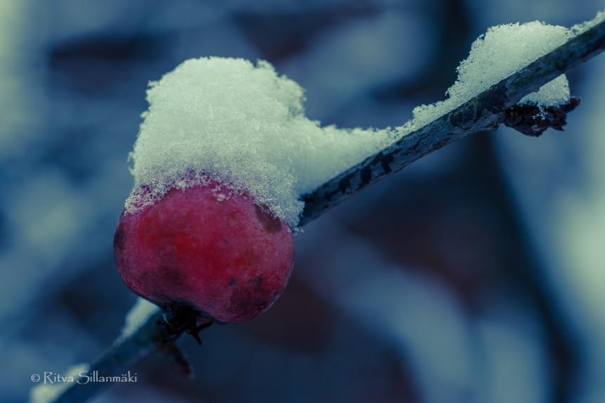 first snow 2014-19