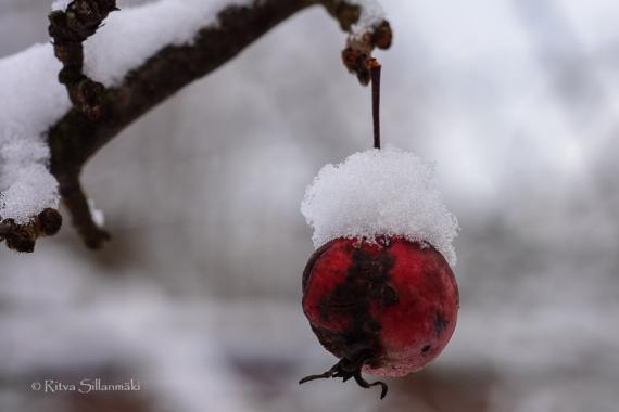 first snow 2014-20