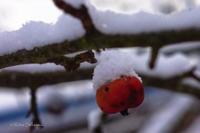 first snow 2014-21
