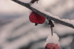 first snow 2014-22