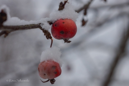 first snow 2014-23