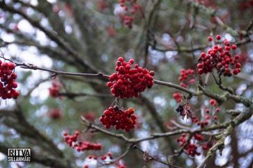 Humaljärvi November (31 of 39)