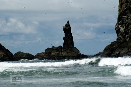 Oregon coastline - beaches-129