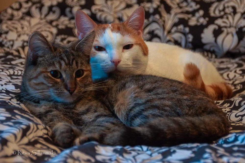 Ritva Sillanmäki_cats (4 of 4)