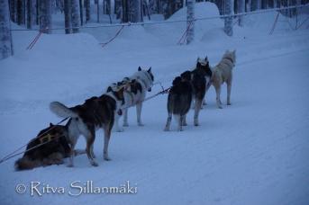 Lapland (100 of 158)