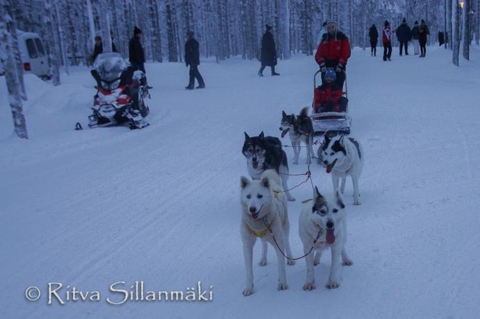 Lapland (101 of 158)