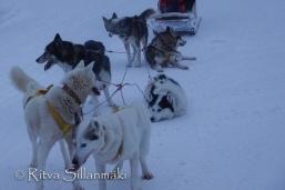 Lapland (103 of 158)
