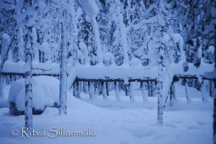 Lapland (110 of 158)