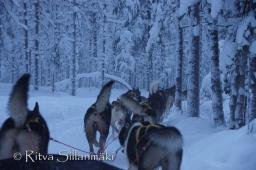 Lapland (15 of 158)