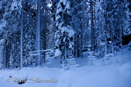Lapland (29 of 112)