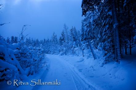 Lapland (30 of 112)