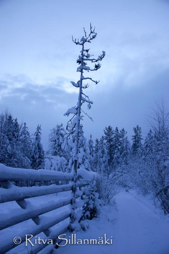 Lapland (36 of 112)