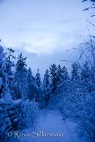 Lapland (38 of 112)