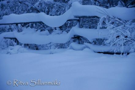 Lapland (55 of 112)