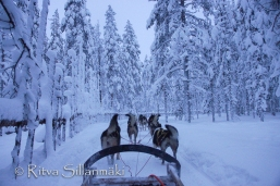 Lapland (8 of 158)