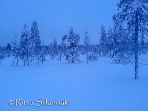 lapland blues (6 of 9)