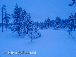 lapland blues (7 of 9)