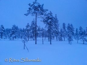 lapland blues (8 of 9)