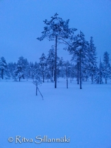 lapland blues (9 of 9)