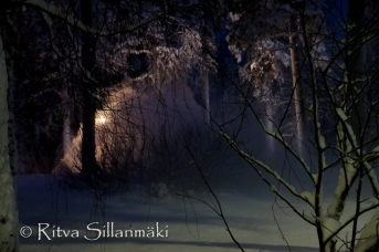 lapland darkness (3 of 4)