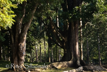 trees and shadows-2