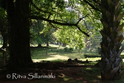 trees and shadows-9