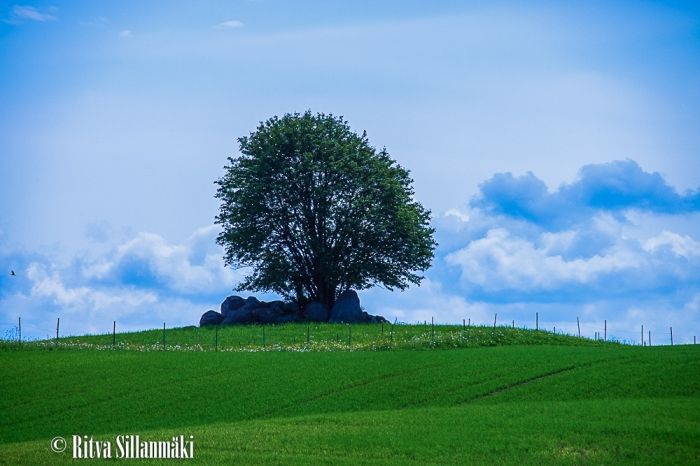 untitled (12 of 13)