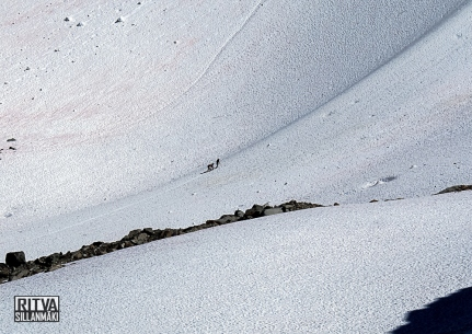 Mt whistler