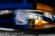 Feather on a silver plate (14 of 35)