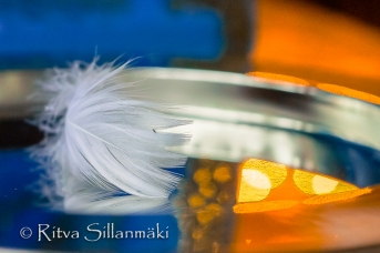 Feather on a silver plate (15 of 35)