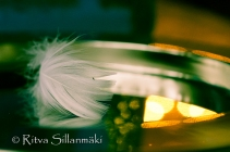 Feather on a silver plate (16 of 35)